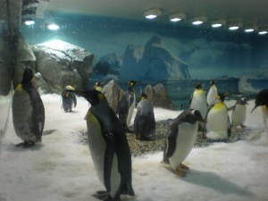 Penguins at Sea WorldIt was hot and crowded when we were there.  I envied the penguins in their snowy enclosure.