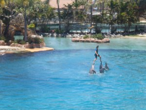 Dolphin Show at Sea World