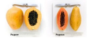 pawpaw vs papaya