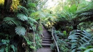 1000 steps Kokoda Trail Memorial Walk